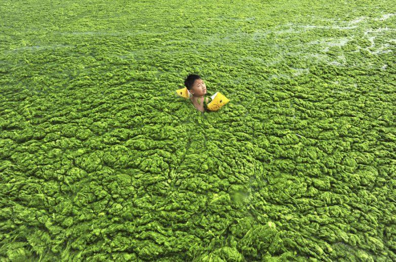 18. Ребенок плавает в водорослях Бурный рост водорослей вызван процессами эвтрофикации. Причиной эвт