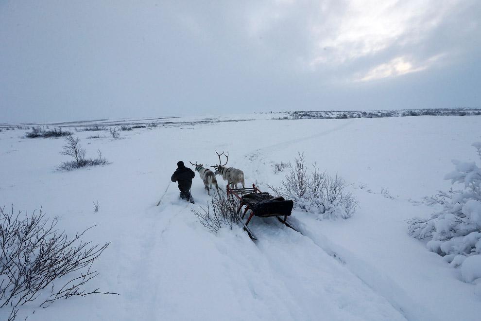 13. Северные красавцы. (Фото Sergei Karpukhin | Reuters):