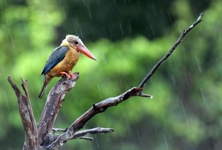 1. Длиннохвостая синица — одна из мелких певчих птиц отряда воробьинообразных. Сообужает очень