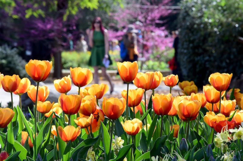 People view the tulips at the Descano Gardens in La Canada Flintridge, California.