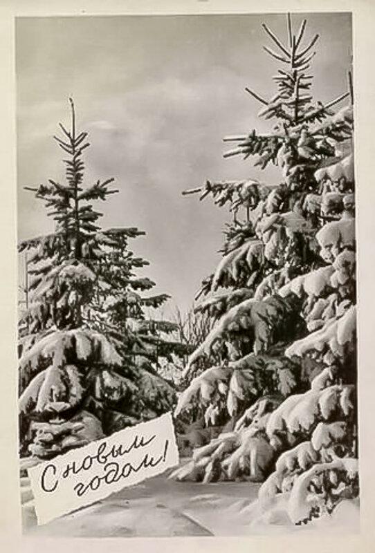 Конь картинках, черно-белые советские открытки