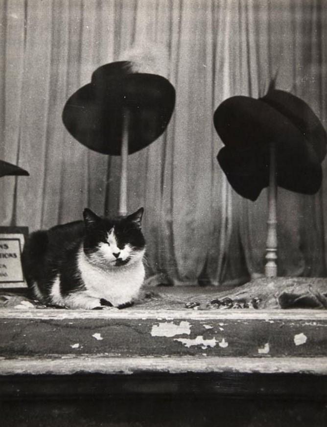 1934. Кот в витрине