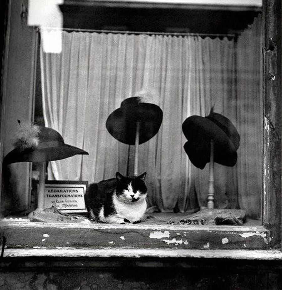 1938. Кот в витрине