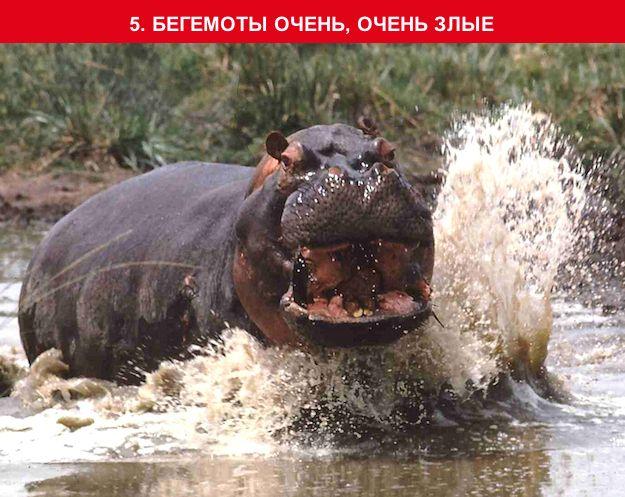 http://img-fotki.yandex.ru/get/2/130422193.96/0_703da_fa9a9be6_orig