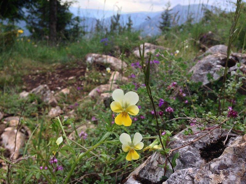 Дурмитор, черногория лето 2015