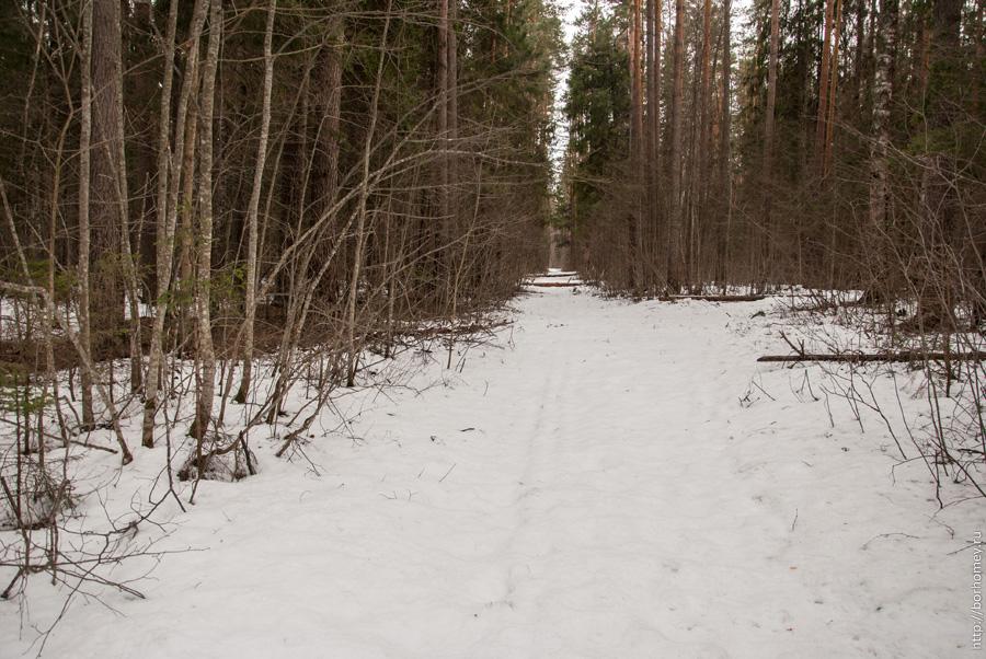 снега в апрельском лесу