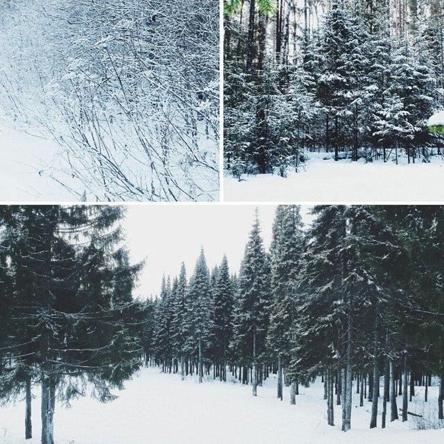 нижний тагил леса пейзажи