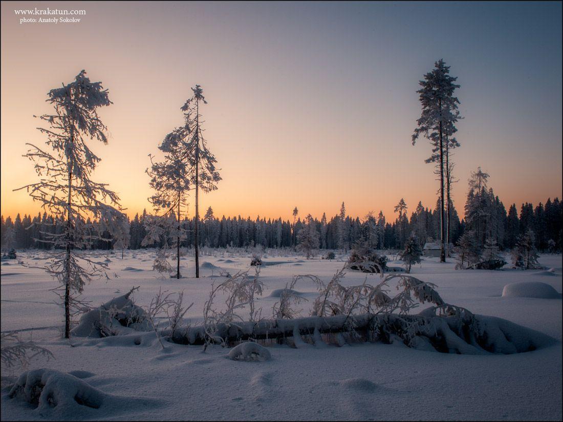 Зимние пейзажи Анатолия Соколова