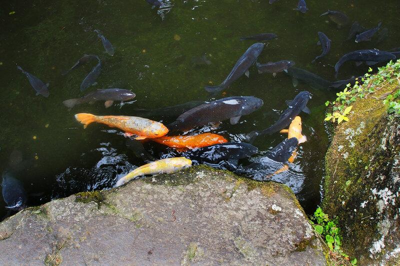 """""""Киты"""" - рыбки по 50 см! Синтоистское святилище Хаконе-дзиндзя"""