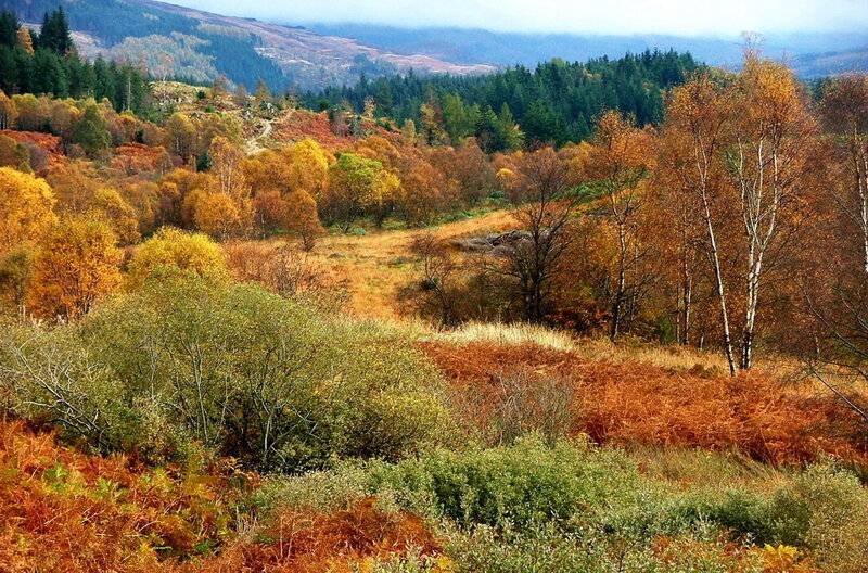 Осень в лесу Ачрэй