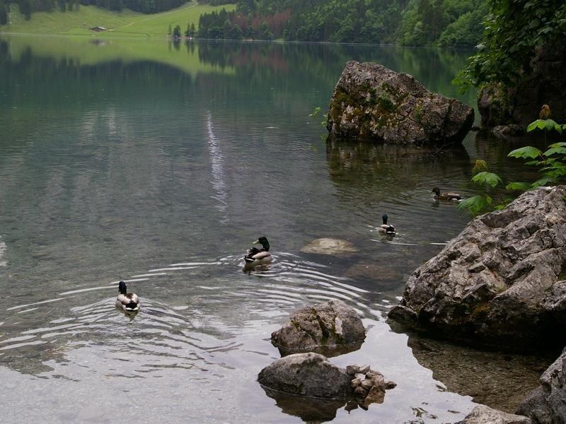 In das Herz Europas 3 Koenigssee (84 фото)