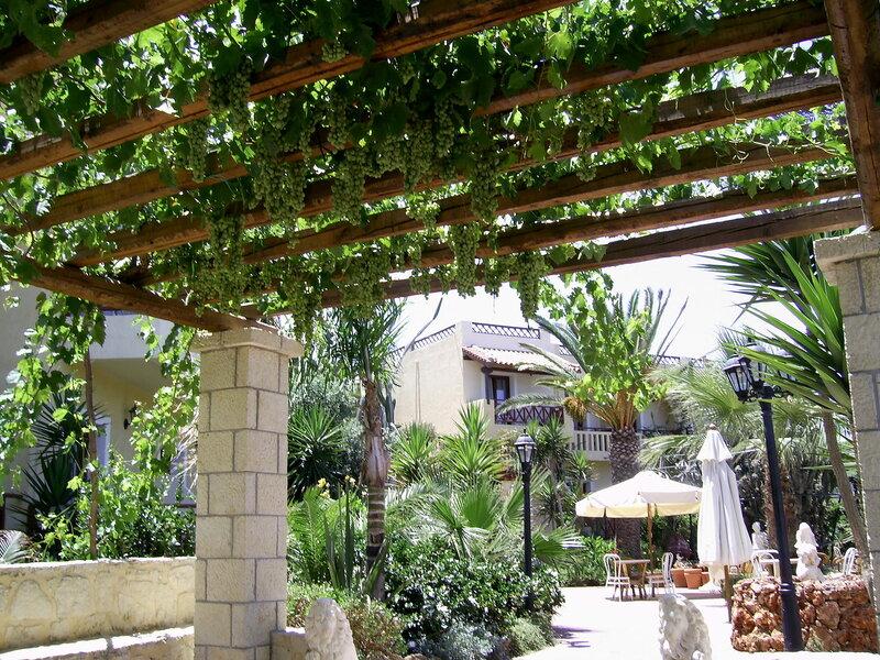Беседки для винограда фото
