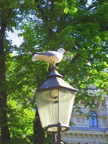 Чайка и фонарь
