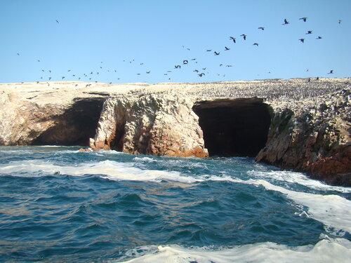 птичьи острова