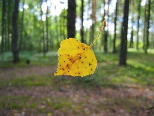 U-Piter — «Скоро осень» на Яндекс.Фотках
