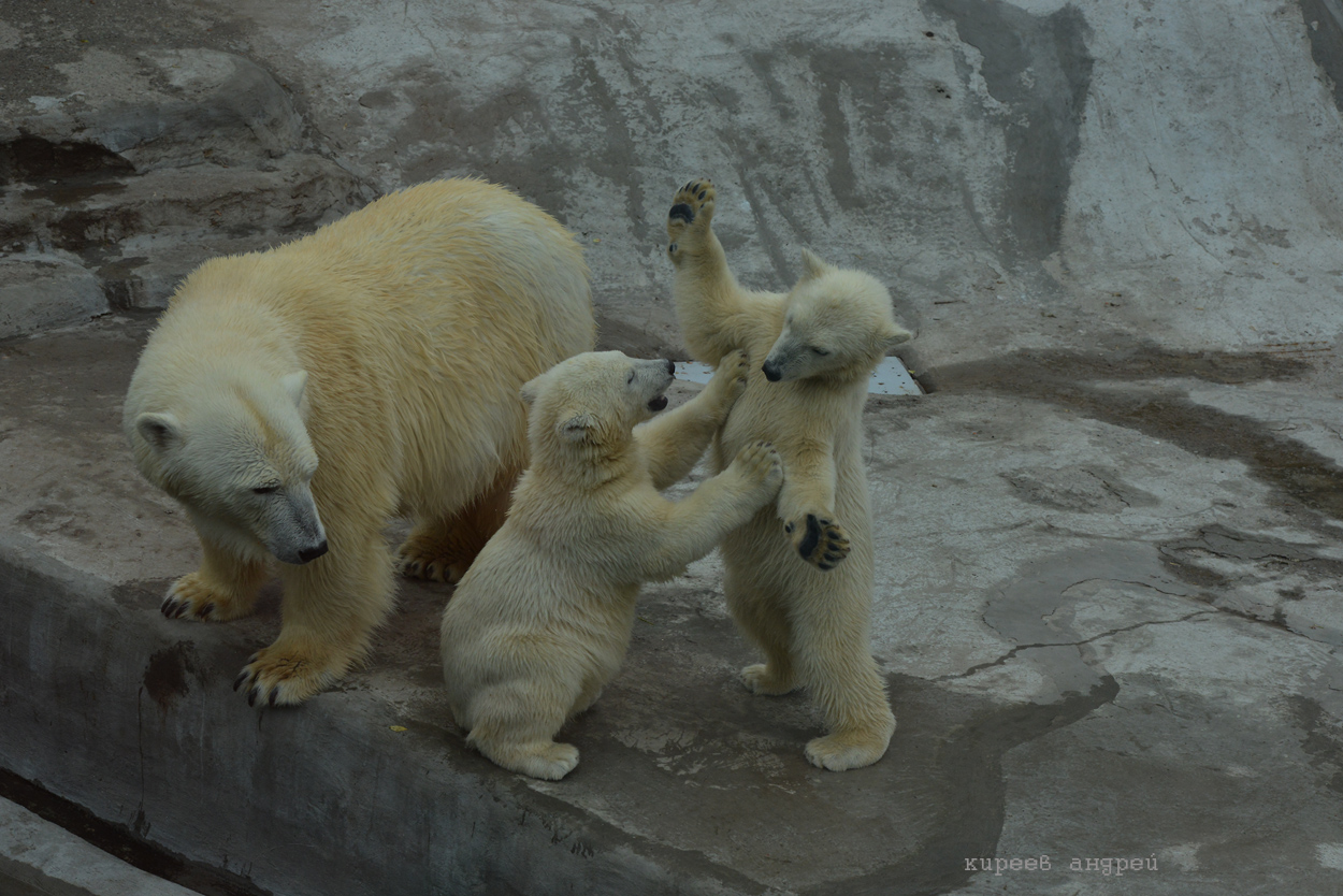 Названы самые популярные животные Московского зоопарка.