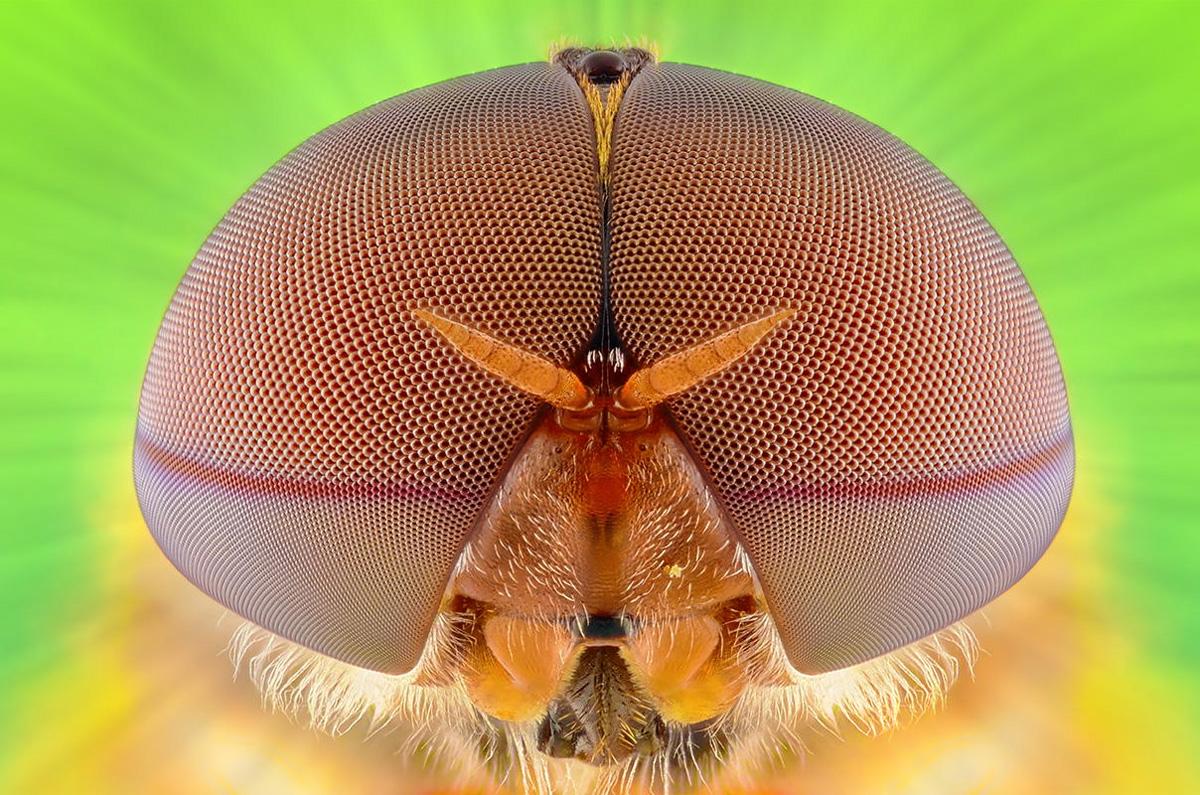 Makrofotografii-nasekomyx-ot-Yudi-Sau-16-foto
