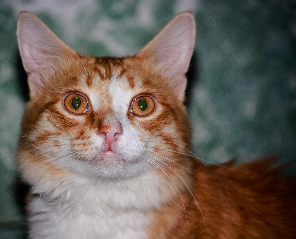 Секс с котом расказы 21 фотография