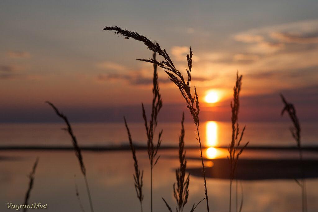 Колоски травы на фоне заката