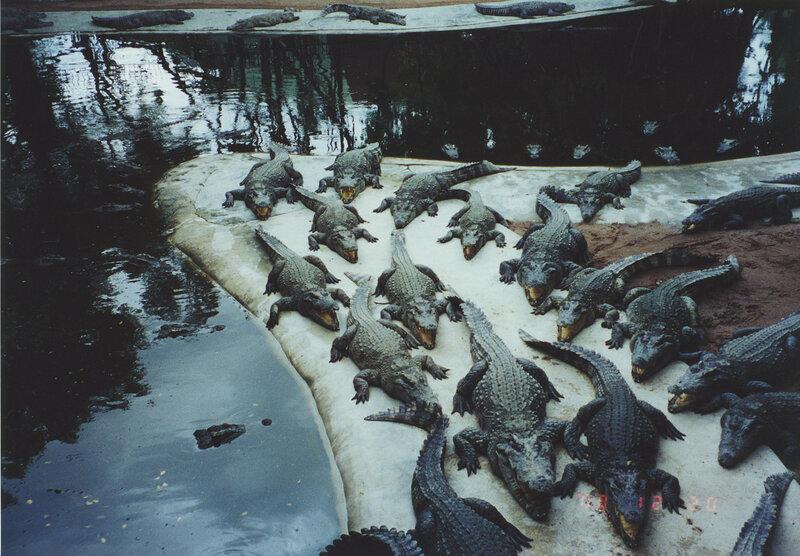 Крокодильчики уже покушали...