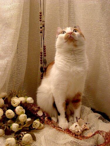 Презентация котята