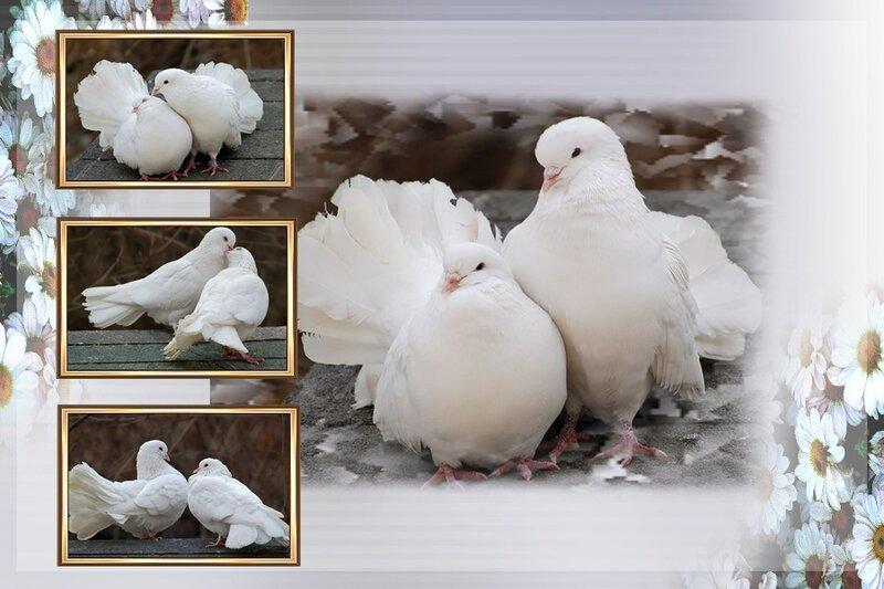 Полёт белых голубей - знак искренности чувств и чистоты... в небо пары.