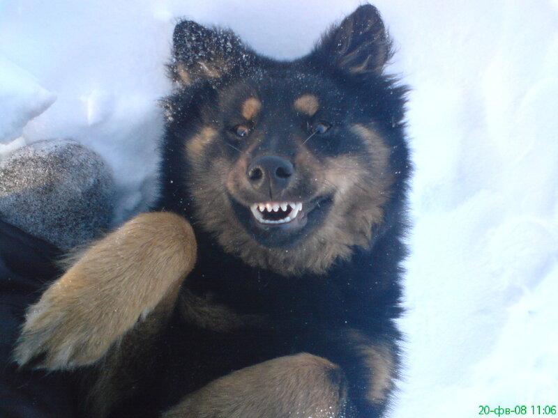Собаки - те же люди, но - с хвостом. И тоже любят шутку юмора.