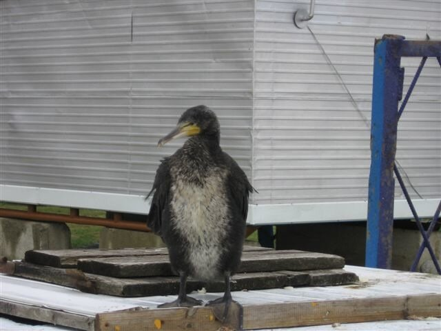 Бедную птичку шторм потрепал
