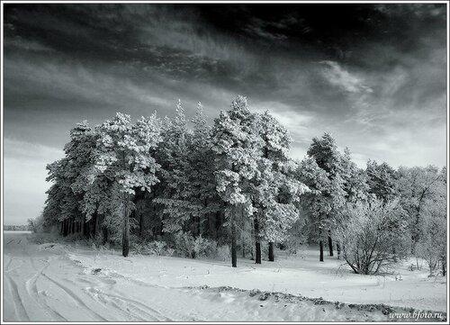 Суровый февраль зима фото
