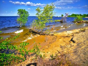 """Волны размывают песчаный берег заставляя деревья """"уходить"""" с берега."""