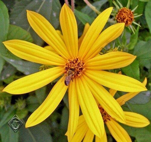 Нежны цветы