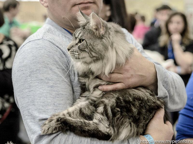 """Выставка кошек """"Кэтсбург - 2017"""""""