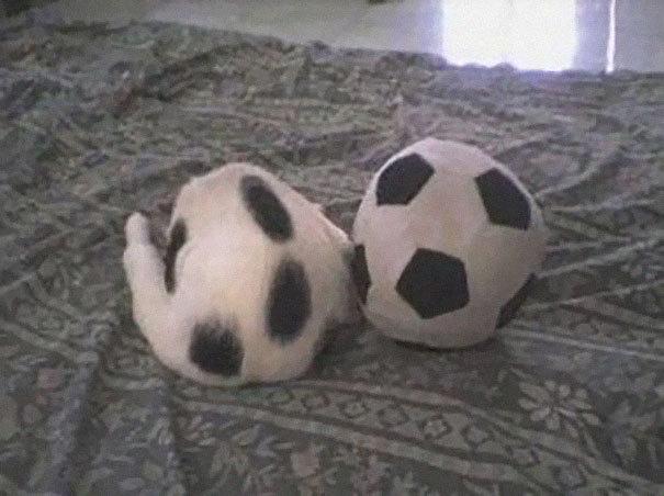 Типа мяч.