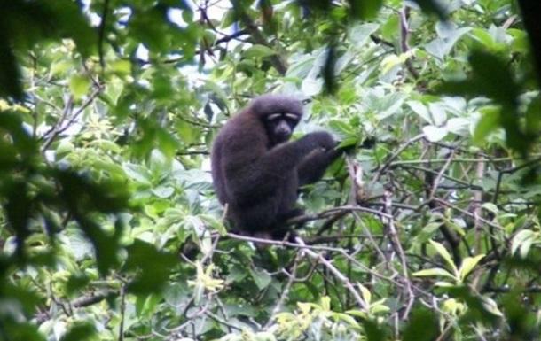 Новый вид обезьян назвали вчесть героя «Звездных войн»