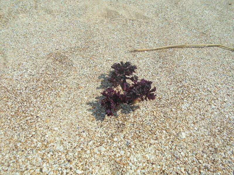Росток сквозь песок ... DSCN1723.JPG