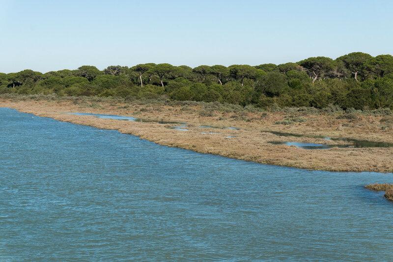 низменный берег реки в кадисской бухте