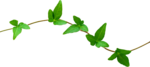 LH_Curious_Leaves_005.png
