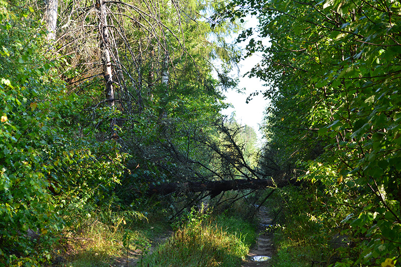 леса бурелом 3.jpg