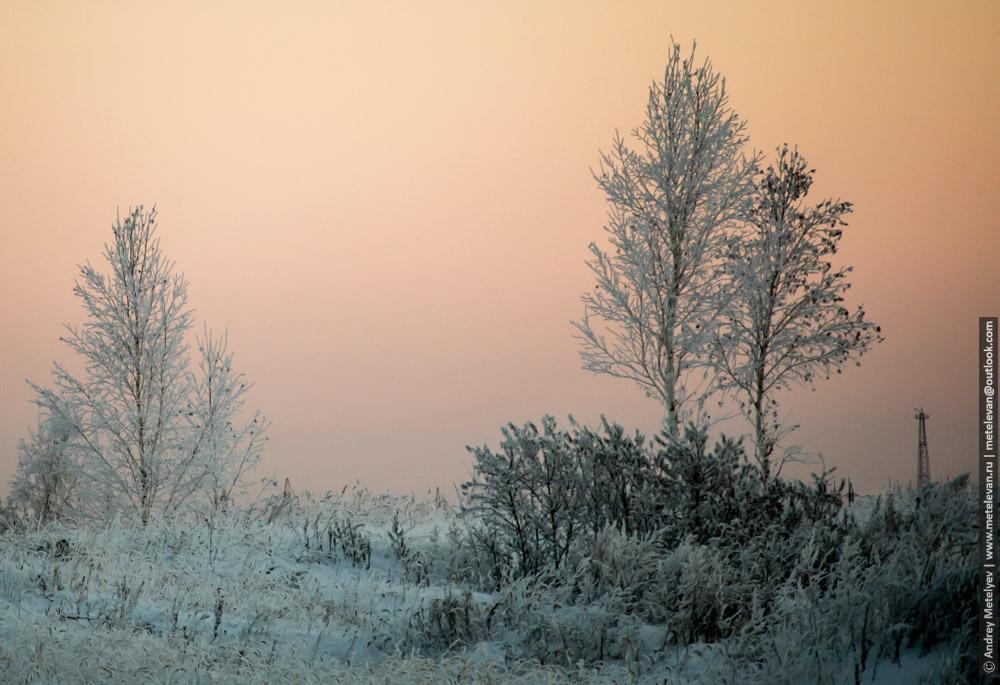 морозное утро на поле и небольшие березы