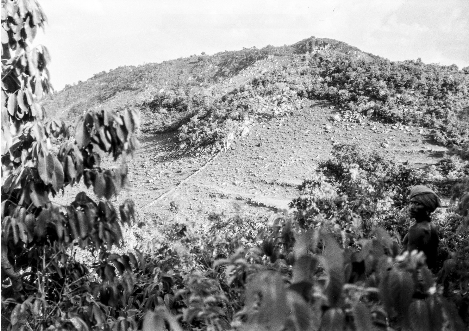 631. Орисса. Вид поля на склоне горы