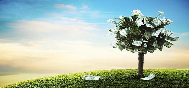 День финансиста. Денежное дерево