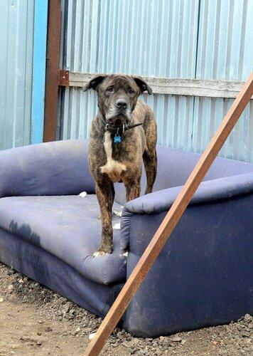 Собака тайсон из приюта догпорта