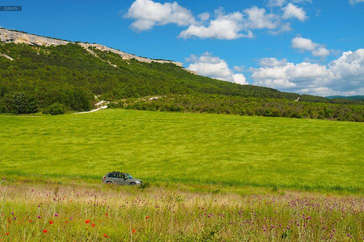 2. Вот как раз пример, когда на месте, где в прошлом году было алое маковое поле, сейчас лишь зелёна