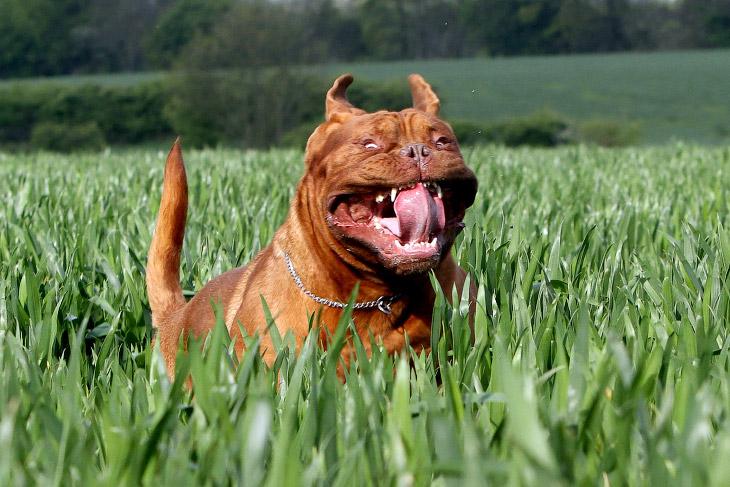 Как выглядят бегущие собаки (12 фото)