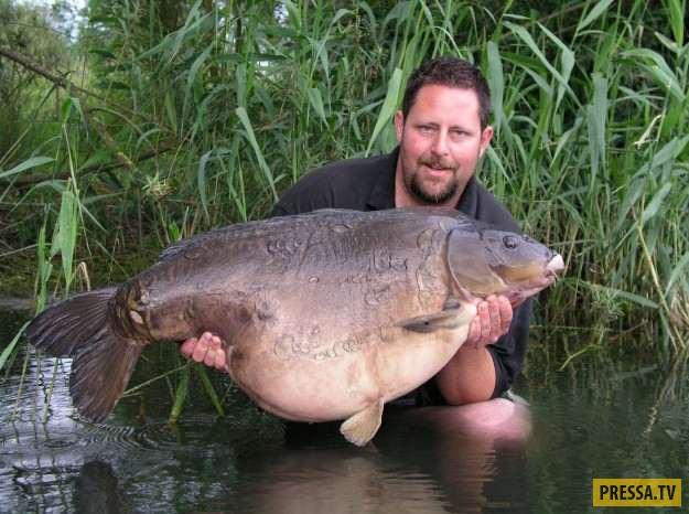 Этот зеркальный карп стал самой крупной пресноводной рыбой в Великобритании, которую ловили больше 2