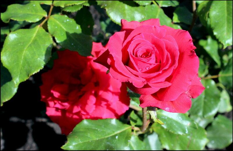 Касарги 3422 Flores