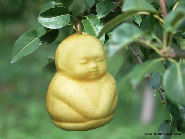 In China, pears shaped as baby or Buddha?