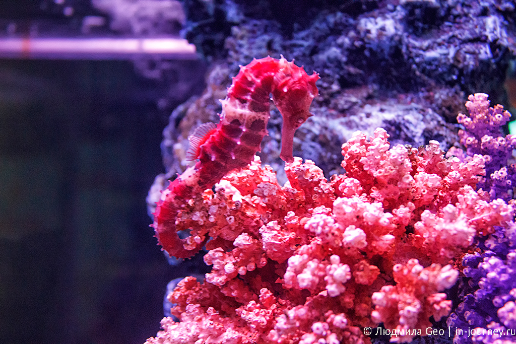 морской конек фото
