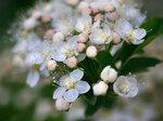 Взрыв цветения