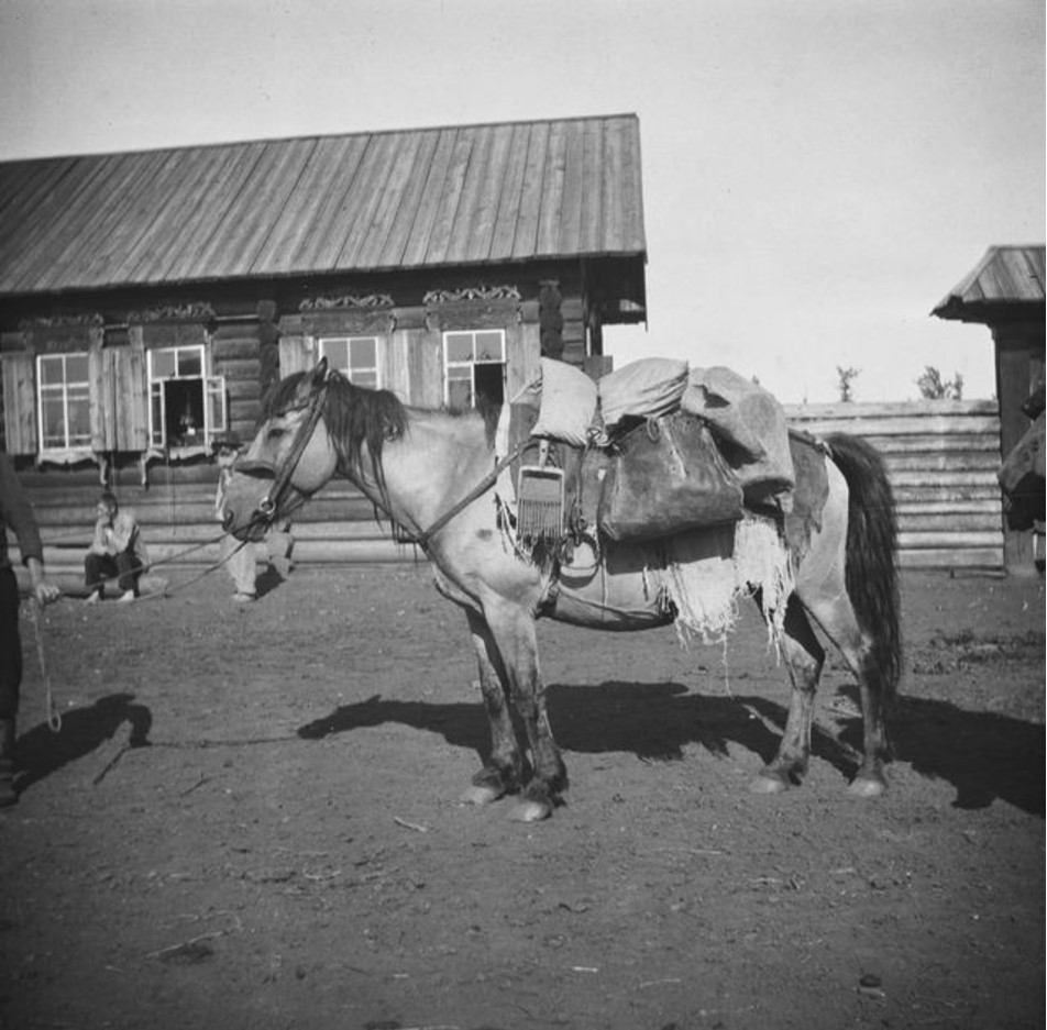 На лошадях по ягоды